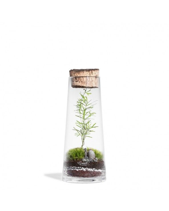 Green Factory Forest mini