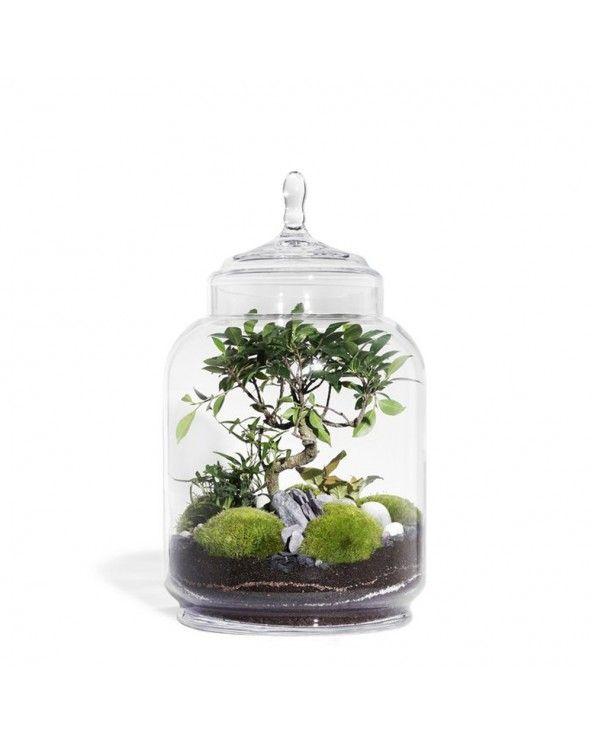 Green Factory Jungle jar